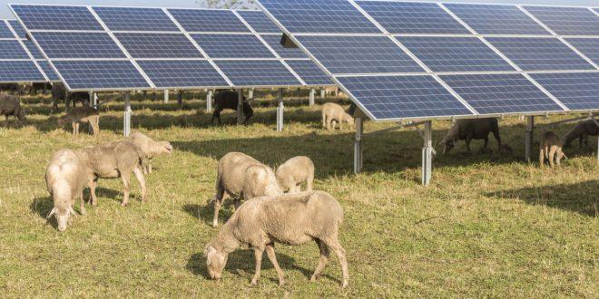 Taroudant: Engie intègre l'énergie solaire à l'agriculture irriguée