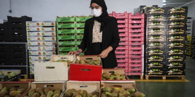 Espagne : partie de rien, cette famille MRE est parmi les rois des produits maraîchers