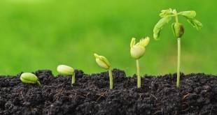 Errachidia: 7e édition du forum régional de l'agriculture durable
