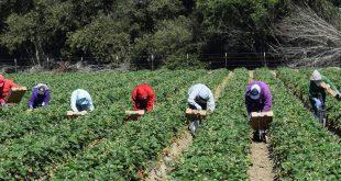Emploi/Covid-19 : 477.000 postes perdus dans le secteur agricole