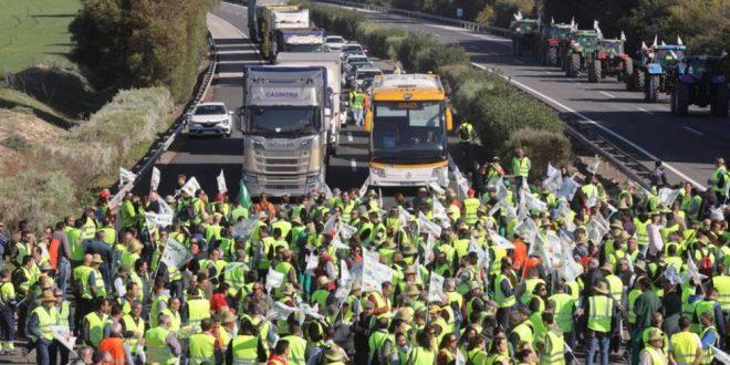 La CETM en Espagne déplore la destruction de produits agricoles marocains