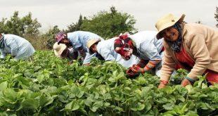 des ouvrières en train de cultiver la terre secteur agricole maroc