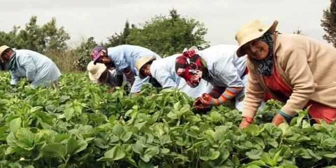 Tanger-Tétouan-Al Hoceima : sensibilisation des agriculteurs au Covid-19