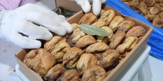 Les exportations de figues sèches de Turquie augmentent légèrement