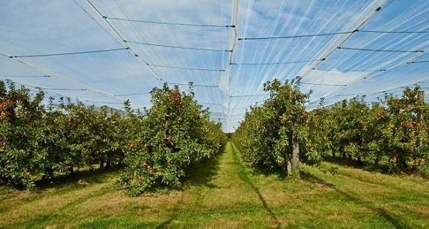 Pomme: Des filets de protection innovant