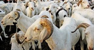 Le Zoopole organise des formations pour le développement des filières animalières