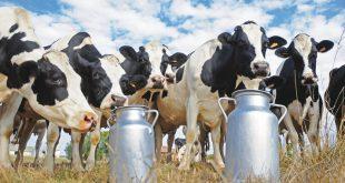 Rabat-Salé-Kénitra production laitière