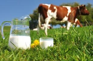 La filière laitière au Maroc