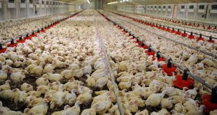 La FISA dénonce la présentation tronquée du secteur avicole par des médias de la place