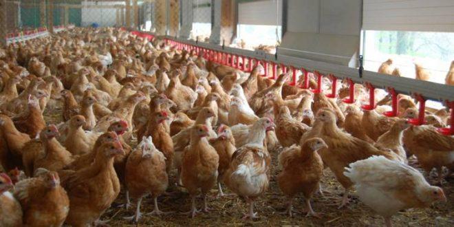 Covid-19: La FISA donne un million et rassure sur l'approvisionnement en volailles