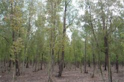 Traitement des arbres de la forêt de Bouskoura