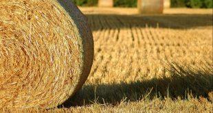 670.000 quintaux de fourrage subventionné pour combler le retard des pluies