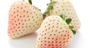 Des scientifiques développent une variété de fraise blanche