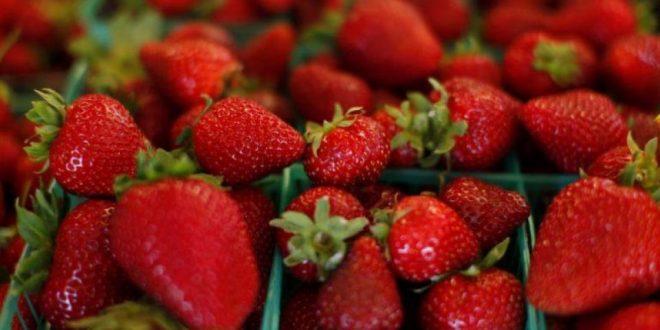 Flambée des prix des fraises sur le marché européen