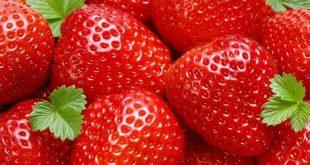 De l'huile de cannabis pour conserver les fraises