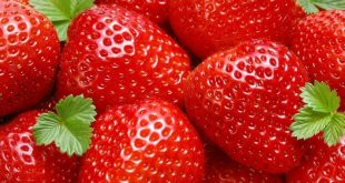 ozone un allié de taille pour la désinfection et la conservation des fruits