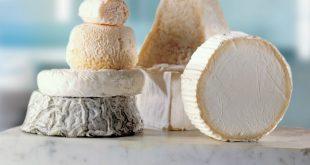 Rehamna : lancement de la première fromagerie de chèvre