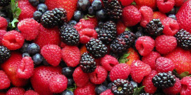 Tanger-Tétouan-Al Hoceima : la superficie des fruits rouges atteint 5000 ha
