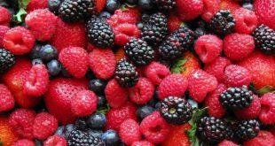 Maroc filière des fruits rouges performe export