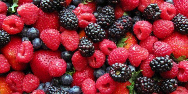 Maroc : les exportations de fruits rouges vers l'Espagne ont atteint 3,3 MMDH