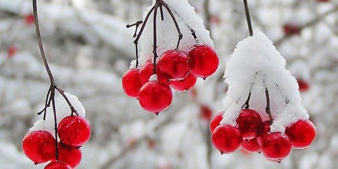 Russie-Le-gel-réduit-la-production-de-fruits-de-20-%