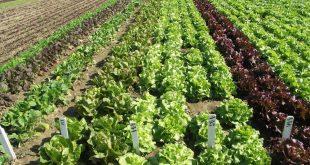 Covid-19-Le-Maroc-plus-que-motivé-pour-poursuivre-la-production-agricole