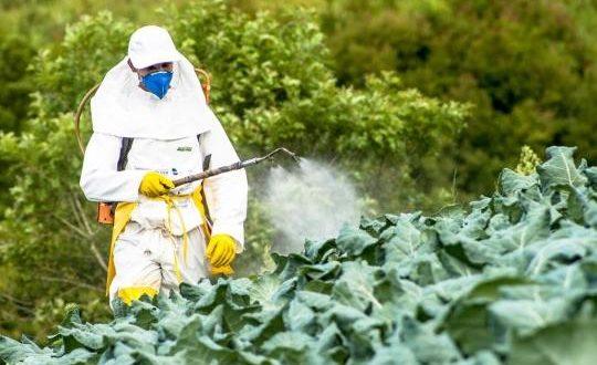 Greenpeace: L'Italie est le 2ème pays exportateur de pesticides interdits