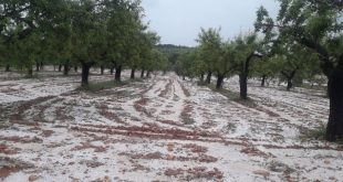 Ifrane-La-grêle-fait-des-dégâts-sur-700-ha-de-cultures-agricoles