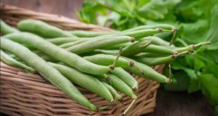 Le Maroc au deuxième rang mondial dans la production de haricot vert