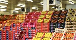 Hausse des exportationsde produits agricoles marocains