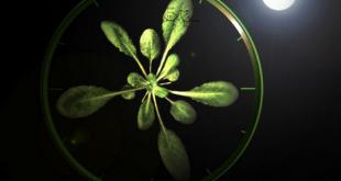 Des études montrent que les plantes ont une horloge biologique