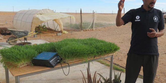hydroponie_agronome_algerie