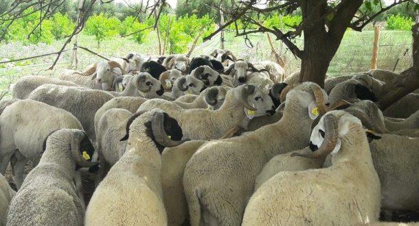 secteur élevage Maroc