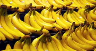 Le monde consomme de plus en plus de bananes!