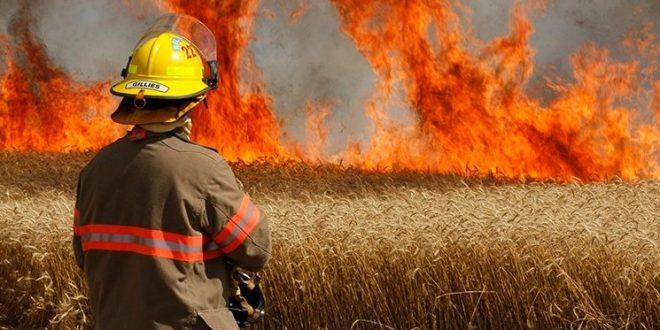 Berrechid : un incendie ravage les récoltes de céréales