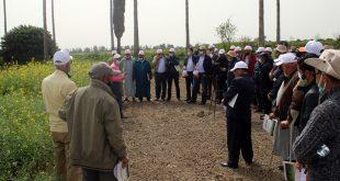Grand succès de la journée sur les variétés INRA de colza