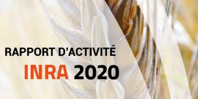 INRA : Parution du rapport d'activités de l'INRA au titre de l'année 2020