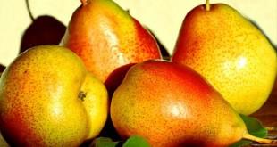 INTERPERA: Le 10e congrès international de la poire