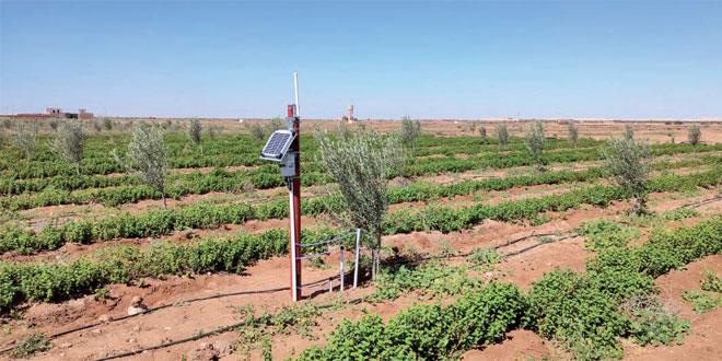 Essaouira-La-technologie-au-service-de-l-économie-en-eau-dans-le-milieu-agricole