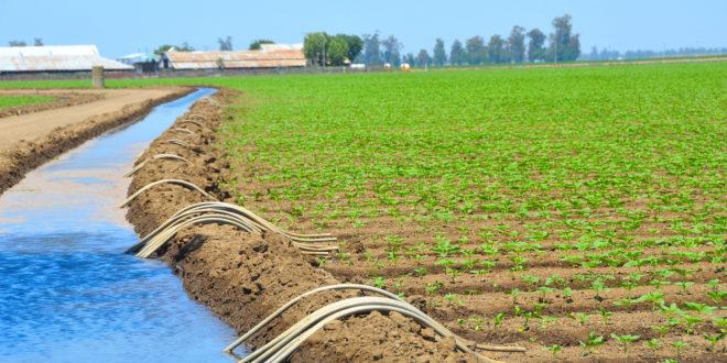 Retard des pluies : L'espoir est encore permis pour une bonne campagne agricole