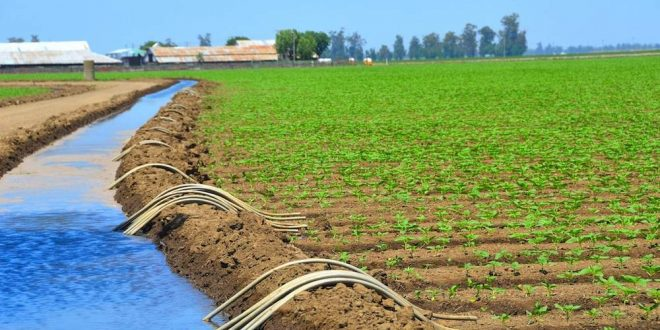 Tanger-Tétouan-Al Hoceima 3,7 MMDH investis dans irrigation