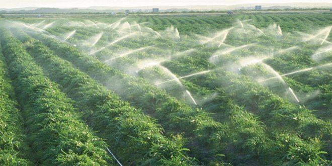 Irrigation localisée: Le ministère de l'agriculture du Maroc revoit les subventions pour l'irrigation localisée