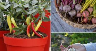 Avec-le-coronavirus-l-intérêt-pour-le-jardinage-à-domicile-augmente