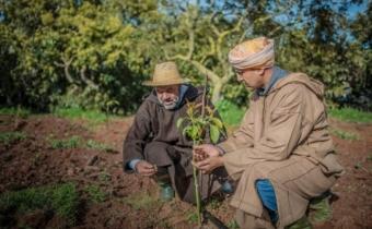 Maroc première édition une journée honneur des conseillers agricoles