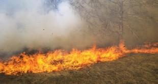 Khemisset: Les feux détruisent 22 hectares de terres agricoles