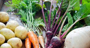 Casablanca-Settat-235.000-tonnes-de-légumes-pour-les-cultures-de-printemps