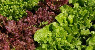 Les supermarchés britanniques s'attendent à une pénurie de fruits et légumes