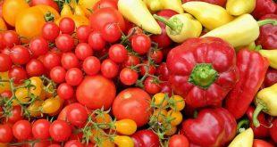 Le Maroc renforce sa position exportateur légumes