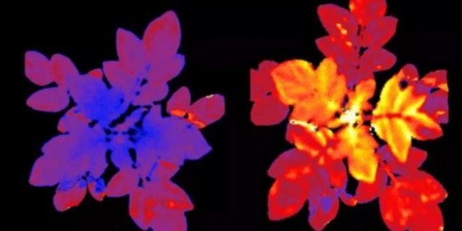 légumes deviennent fluorescents sous effet du stress