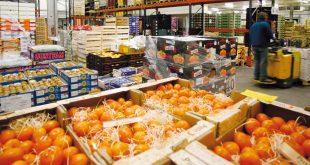 Agadir abrite une plateforme de groupage des fruits et légumes